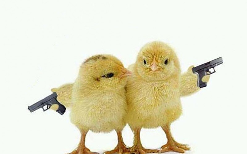 wallpaper-funny-chicks-holding-a-gun-wallpapers-hd-high-quality-widescreen-images-398631